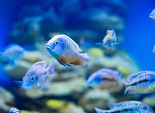 Free Blue Saltwater World Stock Photos - 14402083