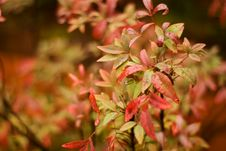 Autumn Leaves With Narrow Depth Of Field Stock Images
