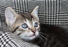 Free Little Cat Stock Photos - 14402363