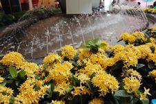 Free Many Flower Royalty Free Stock Photo - 14402485