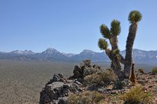 Free Nevada Desert Landscape Royalty Free Stock Images - 14402659
