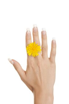 Yellow Flower Between Fingers Of Female Hand Stock Images