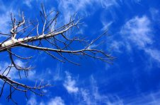 Free Bare Tree & Sky Stock Image - 14405711