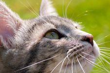 Free Cat Portrait Stock Image - 14408071