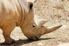 Free Rhinoceros Royalty Free Stock Photo - 14408225