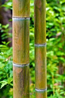 Free Bamboo Royalty Free Stock Images - 14408339