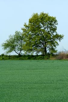 Free Trees And Grassy Field Royalty Free Stock Photos - 14408408