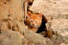 Free Kitten Stock Photography - 14408412