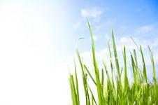 Free Grass Conceptual Image. Royalty Free Stock Photos - 14410988