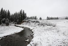 Winter Day In The Cypress Hills Stock Image