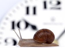 Free Edible Snail Stock Images - 14411194