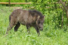 Pony Baby Stock Photography