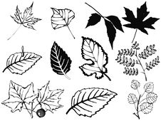 Free Set Of Various Leaves Stock Photo - 14413340