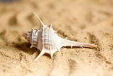 Free Sea Shell Stock Photography - 14413502
