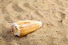 Free Sea Shell Royalty Free Stock Images - 14413559