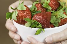 Free Bowl Of Strawberries Royalty Free Stock Photo - 14414655