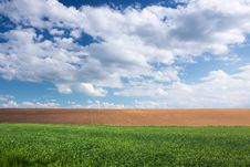 Free Green Wheat Field, Brown Soil And Blue Sky Stock Photo - 14415190