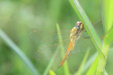 Free Dragonfly Stock Photo - 14415330