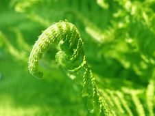 Free Detail Of A Fern Stock Photos - 14416683