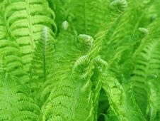 Free Detail Of A Fern Royalty Free Stock Image - 14416686
