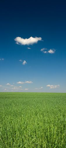 Free Green Field Royalty Free Stock Photography - 14417097