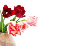 Free Bouquet Of Tulips In A Vase Royalty Free Stock Photography - 14417697