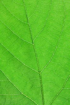Free Texture Of Green Leaf Stock Photos - 14418233