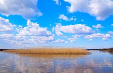 Free Reed On Lake Stock Photography - 14419302