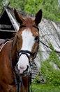 Free Horse Royalty Free Stock Image - 14423516