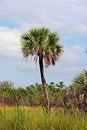 Free Palm Tree Stock Photos - 14426923