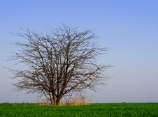 Free Tree In The Field Royalty Free Stock Photography - 14420647