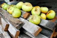 Group Of Apples Royalty Free Stock Photos