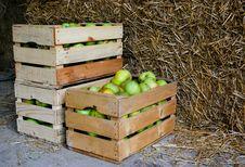 Free Farm Stock Photography - 14422002
