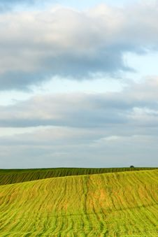 Free Field And Sky Royalty Free Stock Photo - 14422345