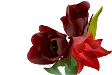 Free Three Red Flowers Tulips Royalty Free Stock Images - 14423009