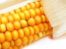 Free Detail Of A Corn Royalty Free Stock Image - 14423876
