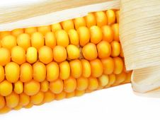 Free Detail Of A Corn Royalty Free Stock Photography - 14423877