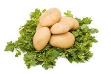 Free Potatoes  Close Up Shoot Royalty Free Stock Images - 14424479