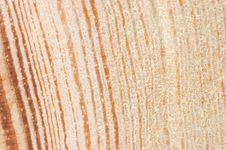 Free Cut Of An Old Tree. Close Up Background Royalty Free Stock Images - 14424689