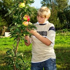 Free Teenager In Apple Orchard Royalty Free Stock Photo - 14425195