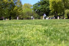 Free Baseball Players In The Park Stock Images - 14426014
