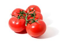 Branch Of Tomatos Royalty Free Stock Photo