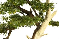 Free Bonsai Detail Stock Photography - 14426232