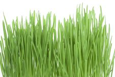 Free Green Grass Royalty Free Stock Photo - 14426485
