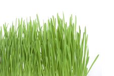 Free Green Grass Stock Images - 14426494