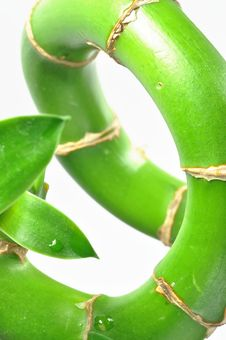 Free Isolated Lucky Bamboo Stem Royalty Free Stock Photo - 14426605