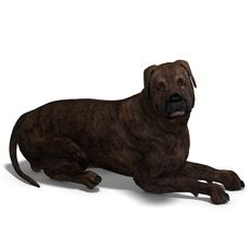 Free American Mastiff Dog. 3D Rendering With Clipping Stock Photo - 14426850