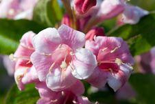 Free Close Up Of Beautiful Blooming Peach Tree Stock Photography - 14427172