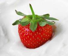 Free Strawberry In Sour Cream Stock Images - 14429184