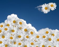 Free Floral Sky Background Royalty Free Stock Photo - 14429315